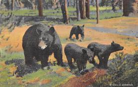 top002845 - Bear Post Card
