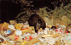 top002847 - Bear Post Card