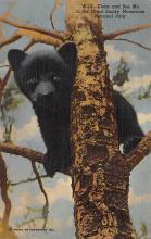 top002855 - Bear Post Card