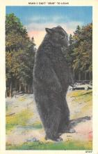 top002857 - Bear Post Card