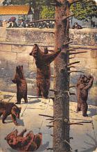 top002925 - Bear Post Card