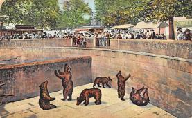 top002947 - Bear Post Card