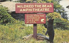 top002979 - Bear Post Card