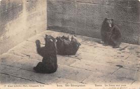 top002981 - Bear Post Card