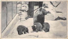 top002983 - Bear Post Card
