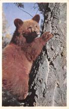 top002987 - Bear Post Card
