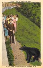 top002995 - Bear Post Card