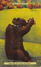 top002997 - Bear Post Card