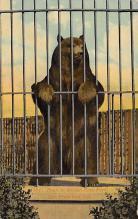 top002999 - Bear Post Card