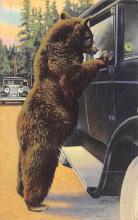 top003001 - Bear Post Card