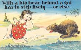 top003023 - Bear Post Card