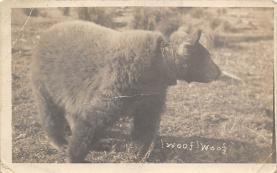 top003027 - Bear Post Card