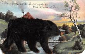 top003043 - Bear Post Card