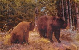 top003141 - Bear Post Card
