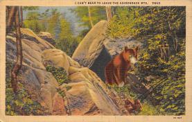 top003143 - Bear Post Card