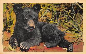 top003145 - Bear Post Card