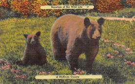 top003159 - Bear Post Card
