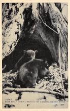 top003163 - Bear Post Card