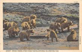 top003175 - Bear Post Card