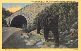 top003179 - Bear Post Card