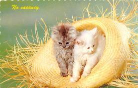 top003237 - Cat Post Card