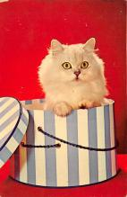 top003245 - Cat Post Card