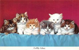 top003249 - Cat Post Card
