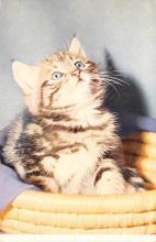 top003255 - Cat Post Card