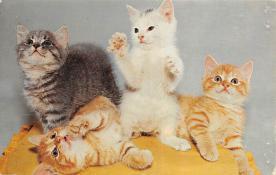 top003259 - Cat Post Card