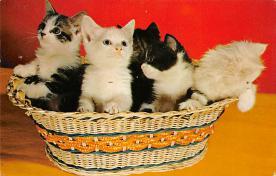 top003287 - Cat Post Card