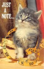 top003293 - Cat Post Card