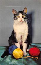 top003299 - Cat Post Card