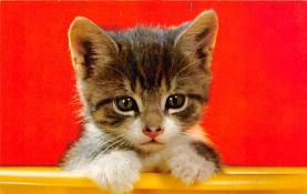 top003303 - Cat Post Card