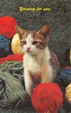 top003313 - Cat Post Card