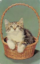 top003315 - Cat Post Card
