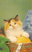 top003319 - Cat Post Card