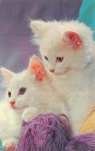 top003321 - Cat Post Card