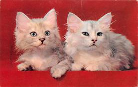 top003323 - Cat Post Card