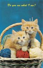 top003349 - Cat Post Card