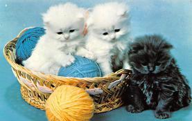 top003351 - Cat Post Card