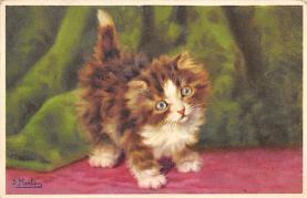 top003359 - Cat Post Card