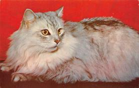 top003365 - Cat Post Card