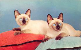 top003373 - Cat Post Card