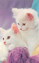 top003375 - Cat Post Card