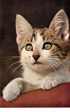 top003377 - Cat Post Card