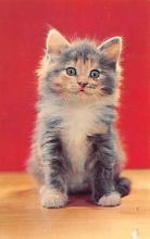 top003385 - Cat Post Card