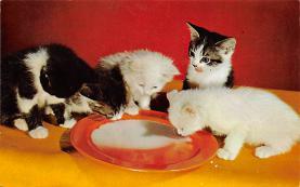 top003393 - Cat Post Card