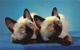 top003399 - Cat Post Card