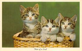 top003405 - Cat Post Card