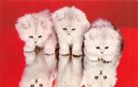 top003413 - Cat Post Card